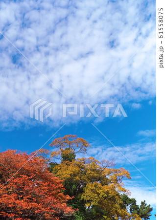 紅葉と青空と雲 61558075