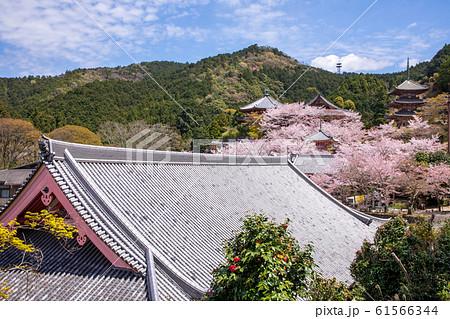 壷阪寺の桜 全景写真 奈良県 61566344