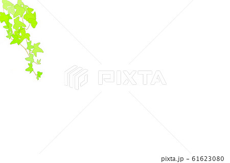 観葉植物・つる性・アイビー・モナリザ-2 61623080
