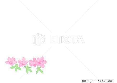 ヤマツツジ・紫・若葉 61623081