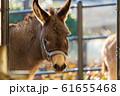 ロバ 仙台市太白区 61655468