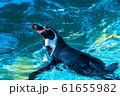 フンボルトペンギン 仙台市太白区 61655982