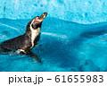 フンボルトペンギン 仙台市太白区 61655983