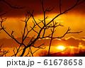 Bare trees 61678658