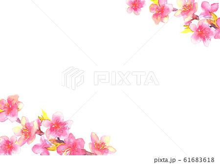 桃 花 桃の花 桃の節句 イラスト 水彩  61683618