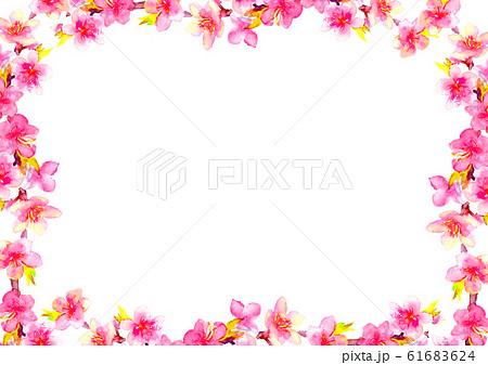 桃 花 桃の花 桃の節句 イラスト 水彩  61683624