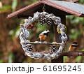 小鳥のリース 61695245