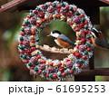 小鳥のリース 61695253