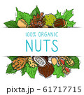 Nuts and seeds collection with paper label vector illustration. Mixed labelled organic nuts. Organic pecan, cashew, almond in square 61717715
