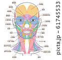顔と首回りの筋肉 口角挙筋の追加 名称入り 61745533