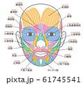 顔の筋肉 口角挙筋の追加 名称入り 61745541