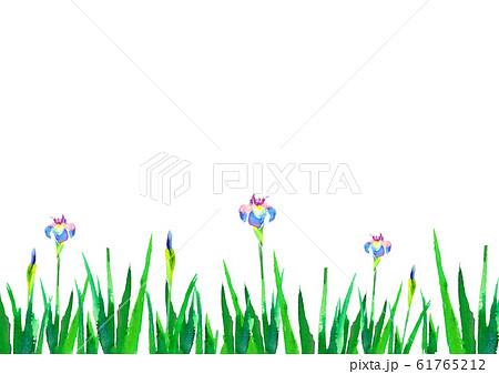 菖蒲 アヤメ 端午の節句 水彩 手描き 背景 61765212
