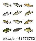 淡水魚 イラスト(カラー) セット 61776752