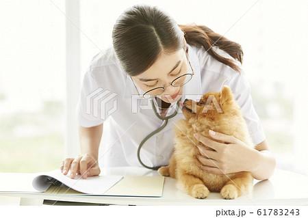 小型犬の診察を行う若い女性 61783243