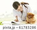 小型犬の診察を行う若い女性 61783286