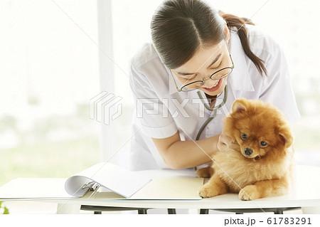 小型犬の診察を行う若い女性 61783291
