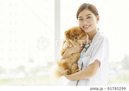 小型犬の診察を行う若い女性 61783299