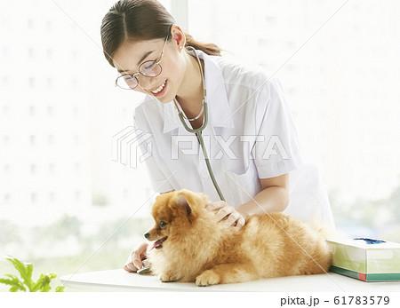 小型犬の診察を行う若い女性 61783579