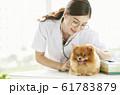 小型犬の診察を行う若い女性 61783879