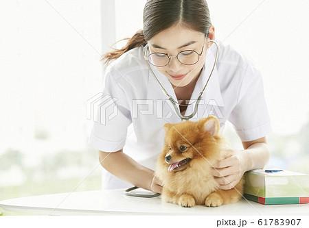 小型犬の診察を行う若い女性 61783907