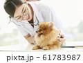 小型犬の診察を行う若い女性 61783987