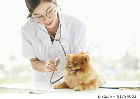 小型犬の診察を行う若い女性 61784002