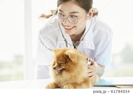 小型犬の診察を行う若い女性 61784034
