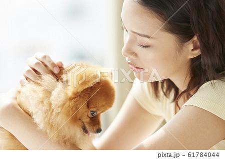 小型犬と暮らす若い女性 61784044