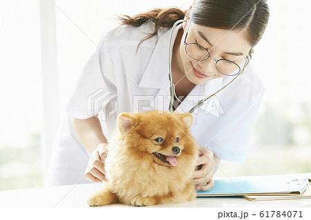 小型犬の診察を行う若い女性 61784071