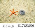 ヒトデ ウニ 砂浜 61785859