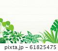 観葉植物 背景 イラスト 園芸 素材 61825475