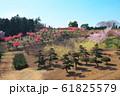 桃の花と庭木が生産されている丘 61825579
