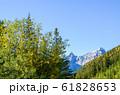 秋のカナディアン・ロッキーの山並みと黄葉(バンフ国立公園 カナダ・アルバータ州) 61828653