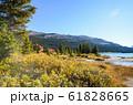 秋のカナディアンロッキー ボウ・レイク湖岸の黄葉(バンフ国立公園 カナダ・アルバータ州) 61828665