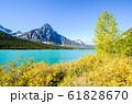 秋のカナディアンロッキー 黄葉の水鳥湖とチェフレン山(ウォーターファウル・レイク)(カナダ) 61828670