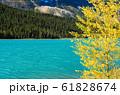 秋のカナディアンロッキー 水鳥湖岸の黄葉(ウォーターファウル・レイク)(バンフ国立公園 カナダ) 61828674