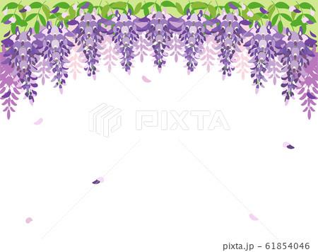 藤の花4 藤 61854046