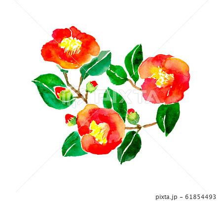 椿 花 イラスト 水彩 和 手描き 61854493