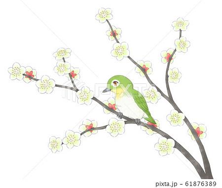 白梅の枝2本にメジロ・線1色 61876389