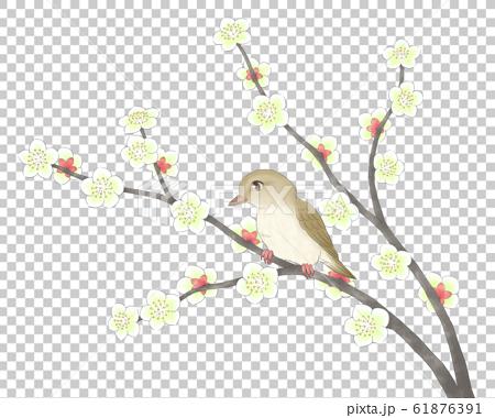 白梅の枝2本にウグイス・線1色 61876391