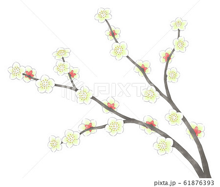 白梅の枝2本・線1色 61876393