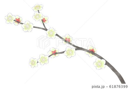 白梅の枝・線1色 61876399