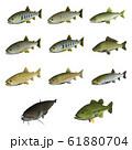 淡水魚 イラスト(3D) セット 61880704
