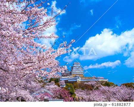 春爛漫の姫路城 61882877