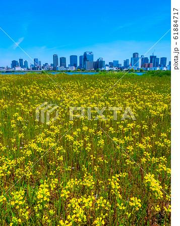 大阪梅田の超高層ビル街 61884717
