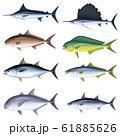 海水魚 イラスト(カラー) セット6 61885626