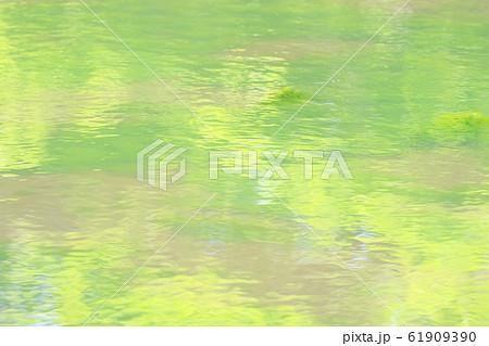 藻がはびこった池 春の温もり 模様 淡い 癒し 61909390