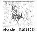 astronomical catalog of constellations on a light 61916284