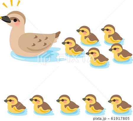 水面を泳ぐ鴨の親子 61917805