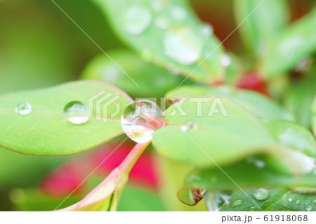 野草に散りばめられた宝石のような滴 61918068